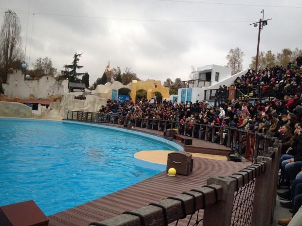 Le spectacle des dauphins, un succès grandiose !